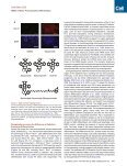 A Small Molecule Primes Embryonic Stem Cells for Differentiation - Page 2