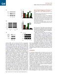 A Small Molecule Primes Embryonic Stem Cells for Differentiation - Page 7