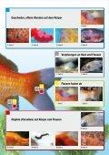 Teichfisch- krankheiten - Thommys Zooladen - Seite 3