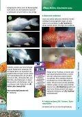 Teichfisch- krankheiten - Thommys Zooladen - Seite 7