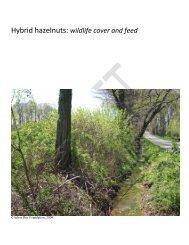 Hybrid hazelnuts: wildlife cover and feed - Arbor Day Foundation