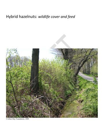 Hybrid hazelnuts: wildlife cover and feed - Arbor Day Foundation