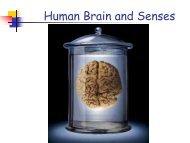 Human Brain and Senses - Science