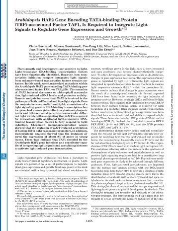 Arabidopsis HAF2 Gene Encoding TATA-binding Protein - URGV - Inra