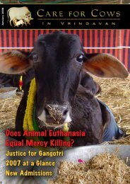 Does Animal Euthanasia Equal Mercy Killing? - Care for Cows