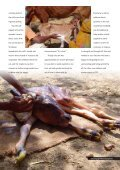 The Cows' Testimony Radha Kund Cases ... - Care for Cows - Page 4
