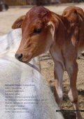 The Cows' Testimony Radha Kund Cases ... - Care for Cows - Page 5