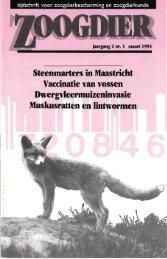 Steenmarters in Maastricht Vaccinatie van vossen ... - Zoogdierwinkel