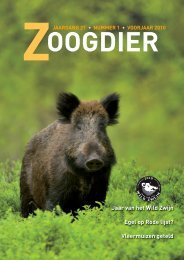 2010 is Jaar van het Wild Zwijn - Zoogdierwinkel