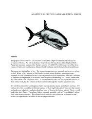 ADAPTIVE RADIATION AND EVOLUTION: FISHES