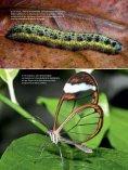 Las mariposas del mar - Page 2