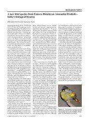 A new bird species from Eastern Himalayan Arunachal Pradesh ...