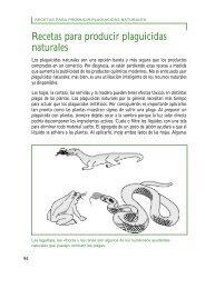 Recetas para producir plaguicidas naturales - World Agroforestry ...