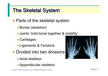 skeletal system of rabbit pdf
