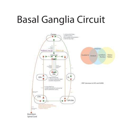 Basal Ganglia Circuit Diagram | Basal Ganglia Circuit