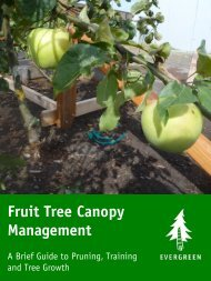 Fruit Tree Canopy Management: A Brief Guide to ... - Evergreen