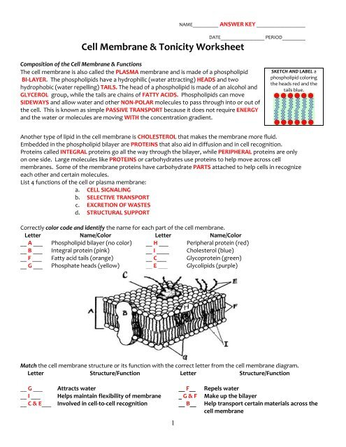 Cell Membrane Coloring Worksheet Honors Biology - Coloring ...