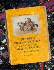 The Breed Characteristics of the Arabian Horse
