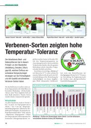 Verbenen-Sorten zeigten hohe Temperatur-Toleranz