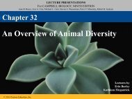 An Overview of Animal Diversity - Lake Central High School