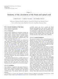 Anatomy of the circulation of the brain and spinal cord