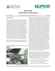 Bull Trout (Salvelinus confluentus) - Wildlife Habitat Council