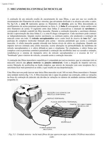 3 - mecanismo da contração muscular - Laboratório de Biologia - IFSC