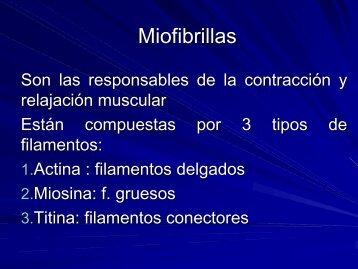 Miofibrillas - Sistema Muscular 2