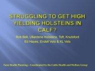Struggling to get high yielding holsteins in calf? - Eblex