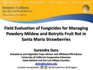 Field Evaluation of Fungicides for Managing Powdery Mildew and ...