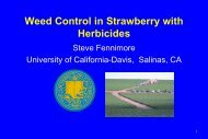 Weed Control In Strawberry With Herbicides