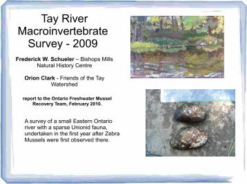 Tay River Macroinvertebrate Survey - 2009 - Pinicola