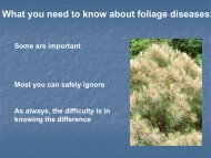 What you need to know about foliage diseases: