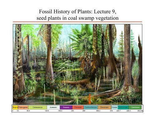 Carboniferous Coal Swamp Floras Seed Plants
