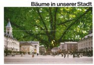 Bäume in unserer Stadt (PDF, 4.07 MB) - Karlsruhe