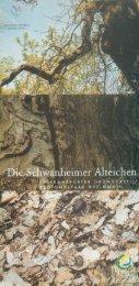 Schwanheimer Alteichen (pdf, 3.1 MB) - Frankfurt am Main