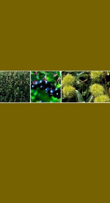 Løvtræer og buske - HedeDanmarks Planteskole