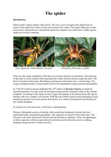 The spider.pdf - Spiders from Europe, Australia and some immunology