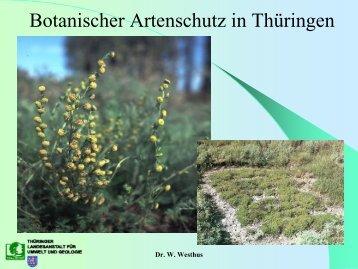 Artenhilfsprogramme für Pflanzenarten in Thüringen