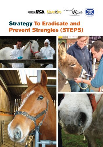 STEPS - British Horse Society Scotland