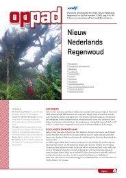 Nieuw Nederlands Regenwoud - Op Pad