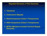 DNA Transposons - Rice Genome Annotation Project