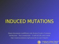 Genetica per Scienze Naturali aa 08-09 prof S. Presciuttini