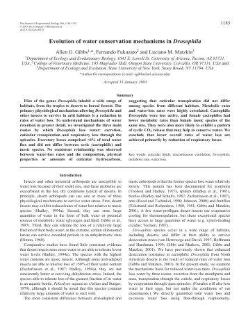 Evolution of water conservation mechanisms in Drosophila