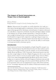 The Impact of Social Interactions on Torpor Use in Hummingbirds