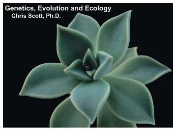 Lecture 17 - Next2Eden