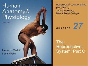 The Reproductive System: Part C - next2eden.net