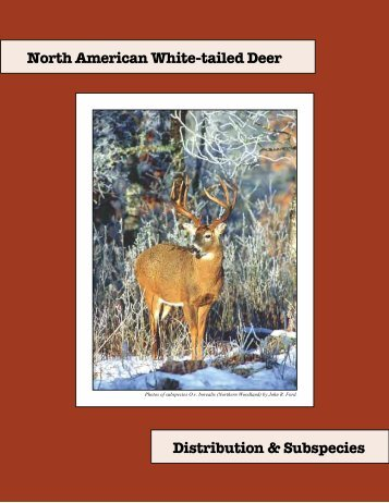 North American White-tailed Deer Distribution & Subspecies