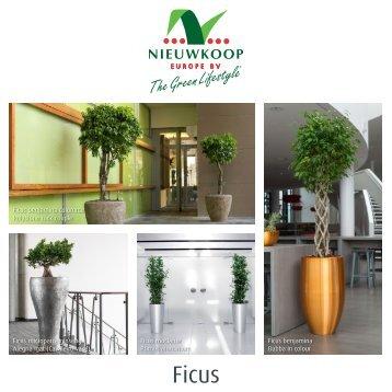 Ficus_brochure_spread