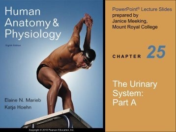 The Urinary System: Part A - Next2Eden